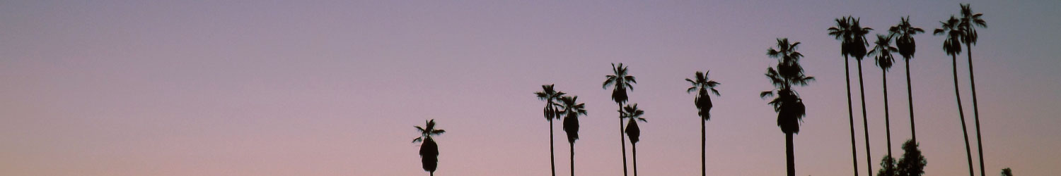 los angeles california sunset with palm trees in skyline